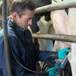milking-hygiene-tips