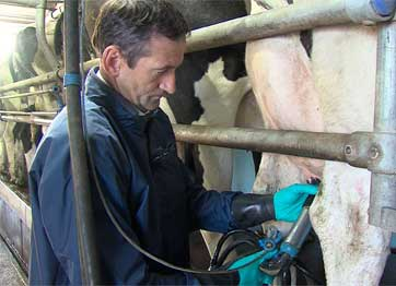 Tips for Good Hygiene and Milking Routine this Summer