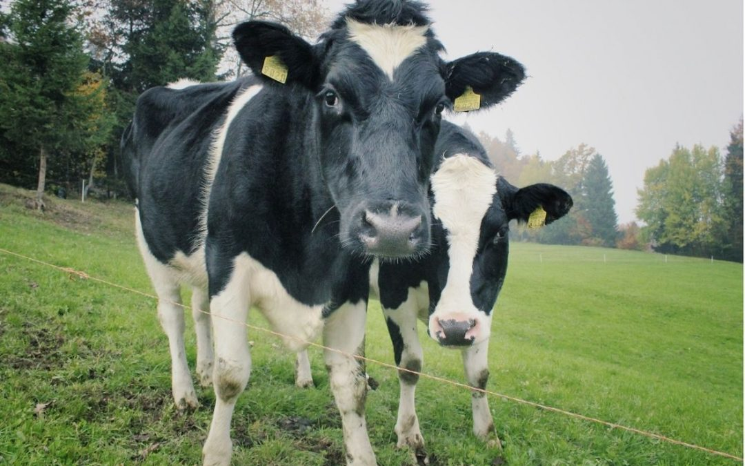 Helping Irish Farmers Take Breaks, Embrace Technology More And Add Efficiencies