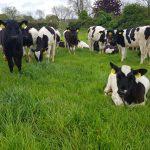 calves-thrive-weather